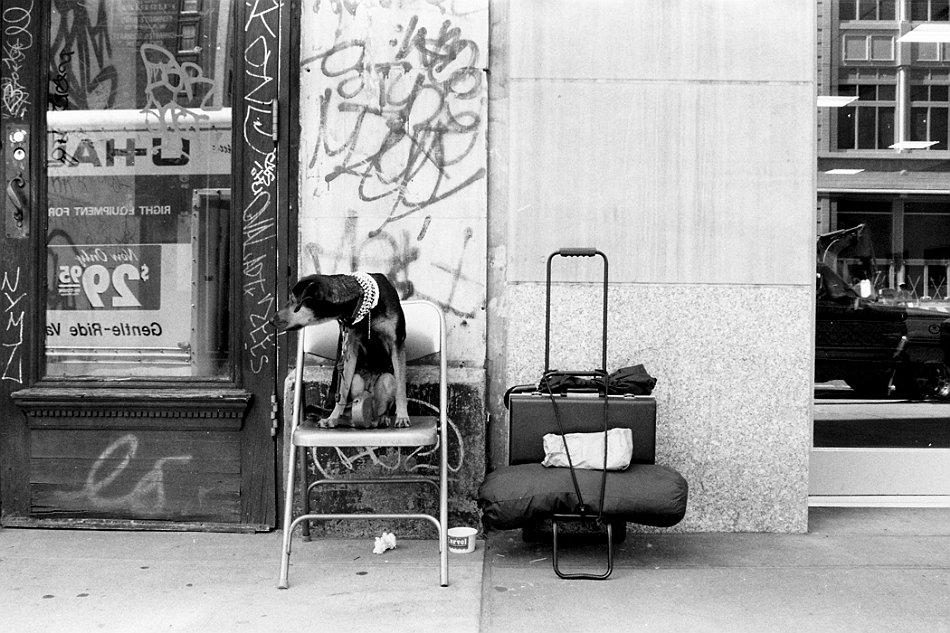 , New York & New Yorkers | wystawa fotografii, Fotografia Ślubna Lublin Wojtek Kornet